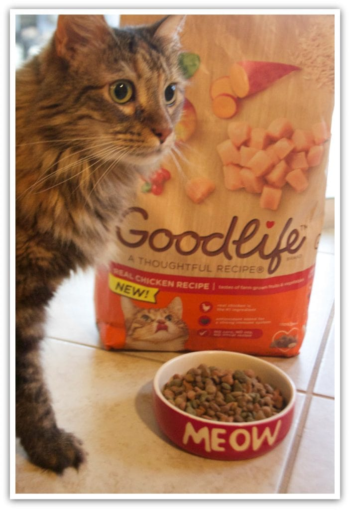 Best Dry Cat Food For The Money