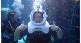 Discovery Cove Sea Venture Experience