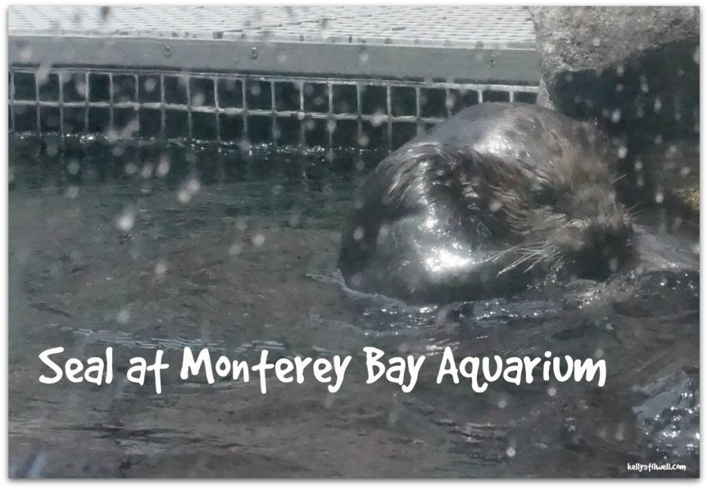 Monterey seals close