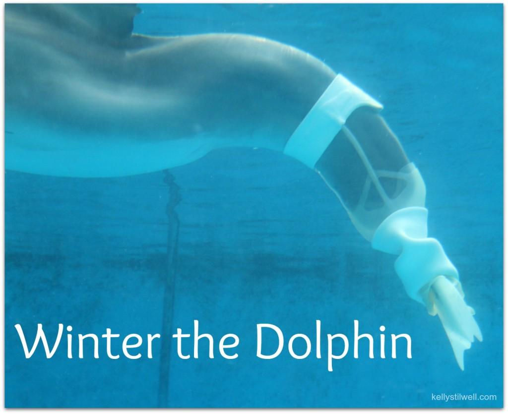 5 Reasons To Visit Clearwater Marine Aquarium Home Of