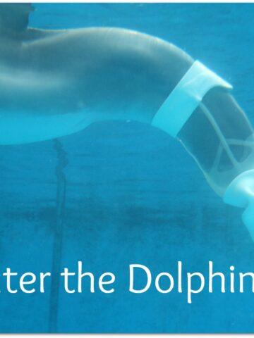 Clearwater Marine Aquarium Winter