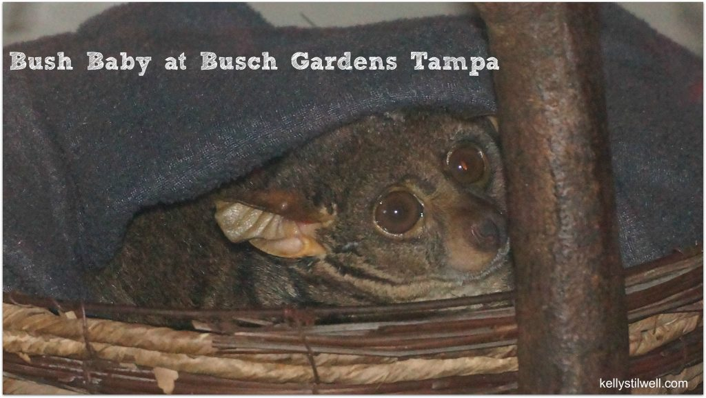 Busch Gardens Tampa is the perfect family vacation destination, whether you are visiting over the summer, spring, fall or winter, and especially for the Christmas holidays when they have their xmas decorations up!