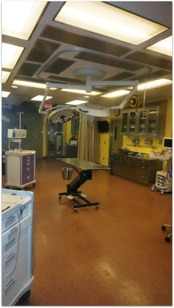 Busch Gardens Tampa hospital