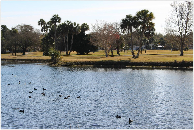 Citrus golf course 2