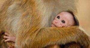 Monkey Kingdom FREE Educational Resources