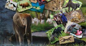 5 Reasons to Splurge on Disney's Wild Africa Trek #MonkeyKingdomEvent