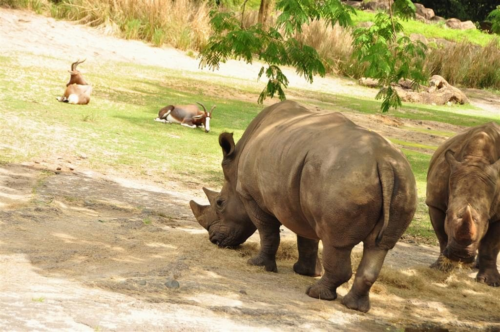 The backstage tales tour at Animal Kingdom is a must for animal lovers!