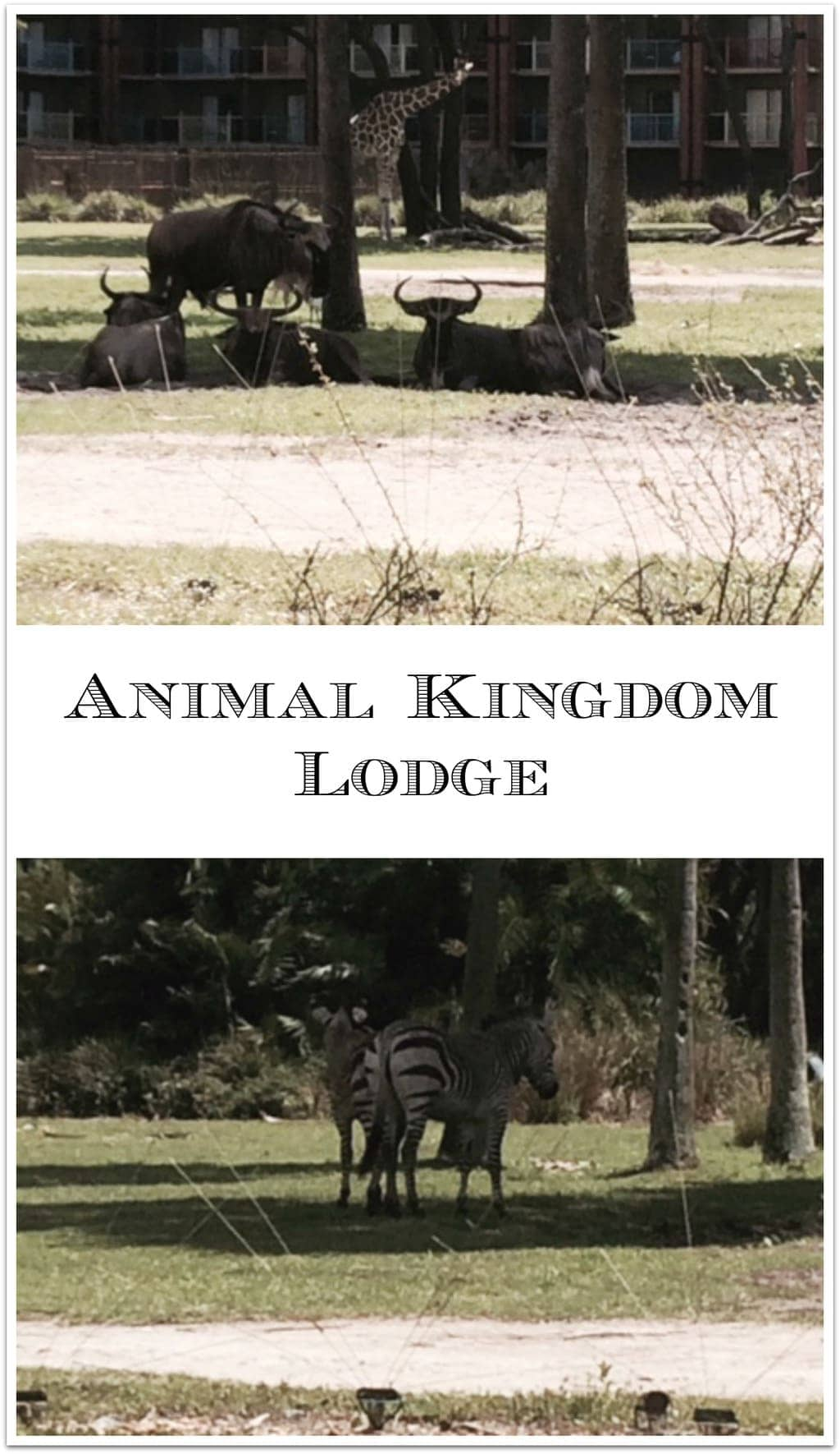 If you are planning to travel to Disney World, the Animal Kingdom Lodge is a must see! I'd recommend lunch or dinner as the food is fabulous!