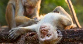 Sri Lanka, the filming location for Monkey Kingdom