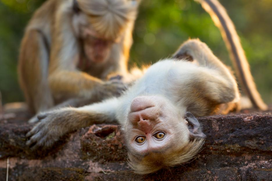 Sri Lanka, the filming location for Monkey Kingdom