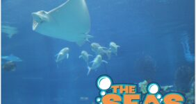 Behind the Scenes at the Seas in EPCOT