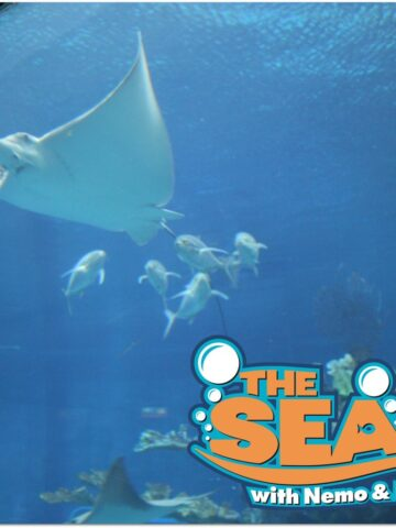The Seas with Nemo and Friends is a fun an educational activity when you are visiting EPCOT. Visit in the heat of the day to relax and enjoy the marine animals and other fun adventures.