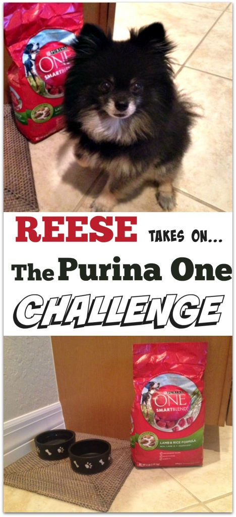Reese takes on the Purina One Challenge