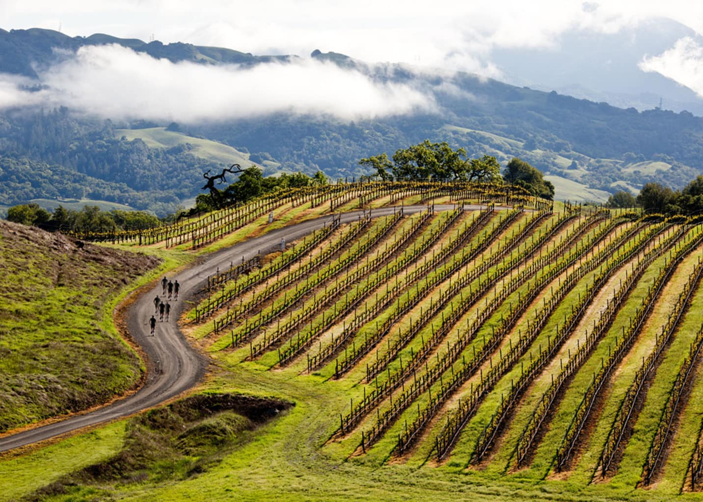 Vineyard Hikes In Sonoma for 2016 - Food Fun & Faraway Places