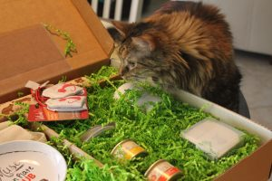 Have you heard about all new Muse cat food from Purina?