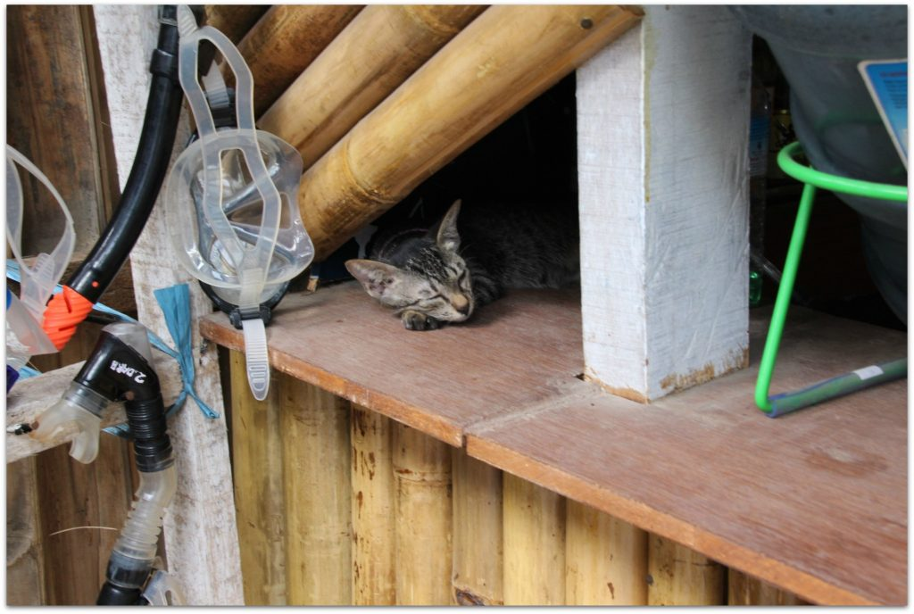 how do you get rid of cats in your garden