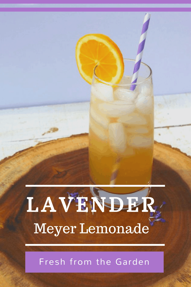 Head to the kitchen and make this DIY recipe for delicious lavender meyer lemonade fresh from your garden