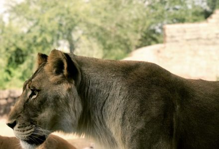 Why You Should Visit the El Paso Zoo