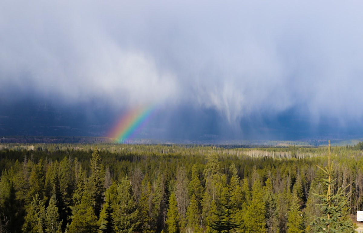 Rainbow and clouds against blue sky over pine trees.
