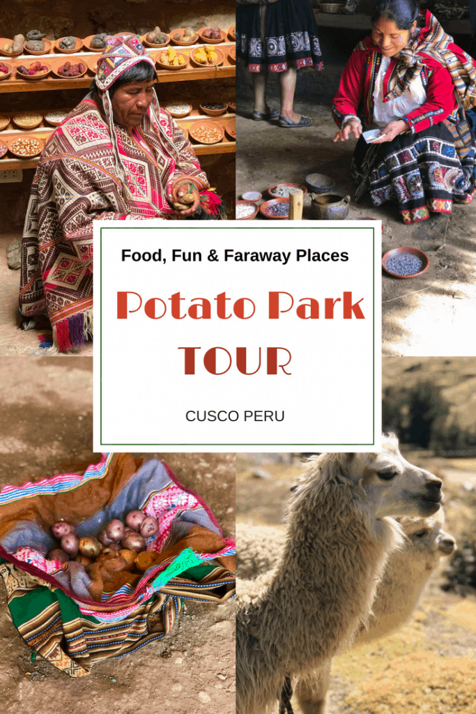 No visit to Sacred Valley Peru is complete without this Cusco tour of Potato Park, locally referred to as Parque de la Papa, where guests can learn about the most important crop to Peruvian cuisine, the potato. #PotatoPark #CuscoPeru #GAdventures #PeruVacation #SouthAmerica #AdventureTravelPeru #AdventureTravel