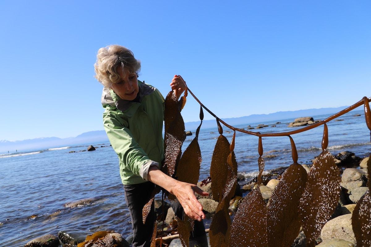 woman holding seaweed
