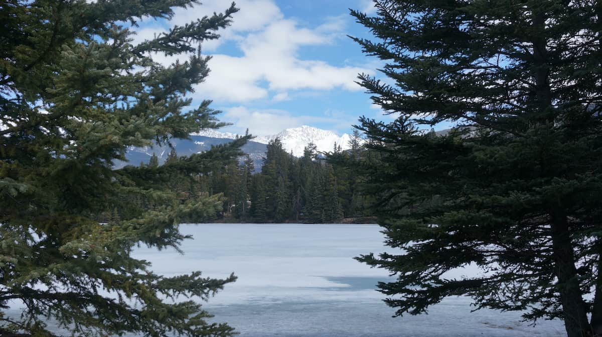View through the trees of mountains in Jasper Alberta Canada.