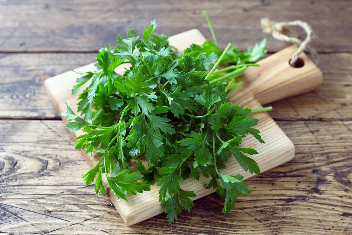 Cilantro on a cutting board on a wood counter.