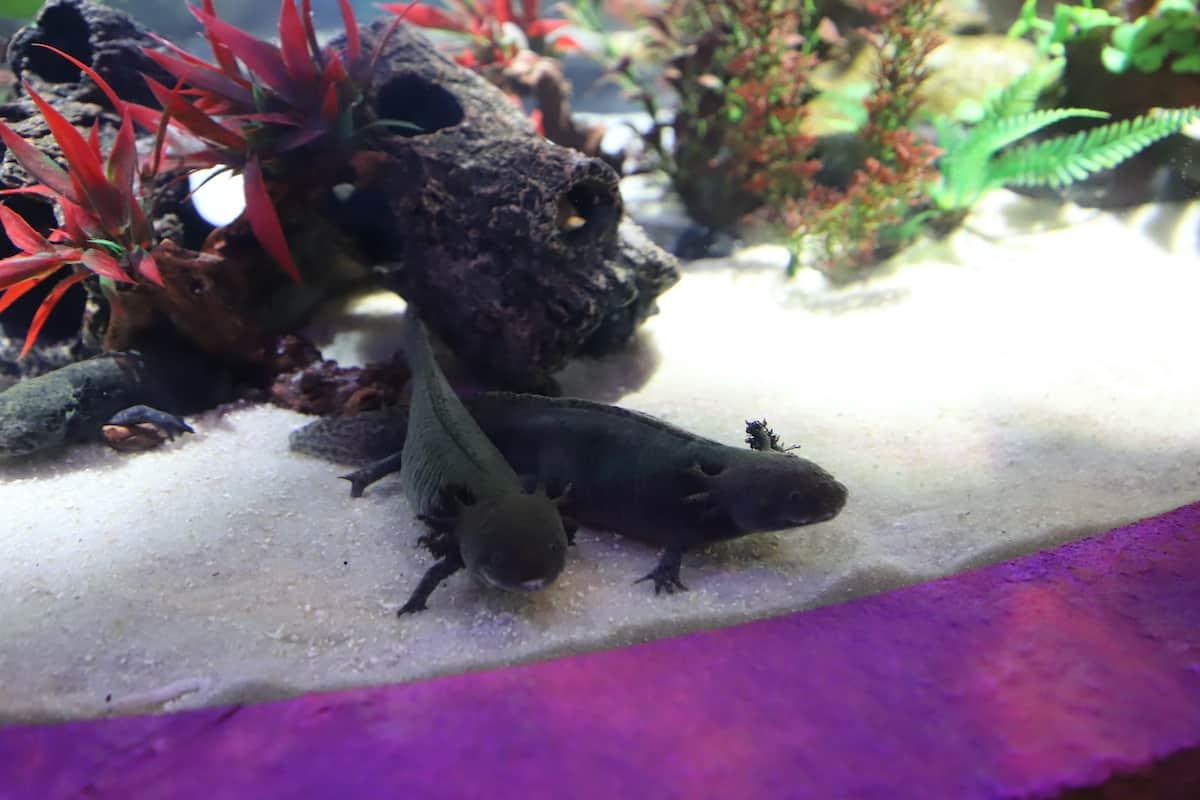 Sea creatures in an aquarium.